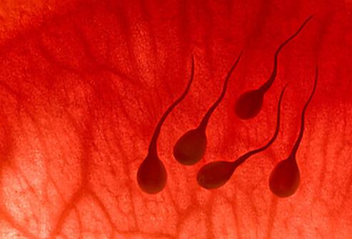esli-sperma-krovavogo-tsveta